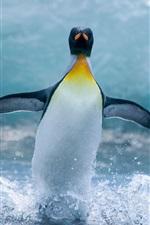 Preview iPhone wallpaper Antarctic penguins dance