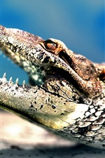 Preview iPhone wallpaper Big mouth crocodile sharp teeth