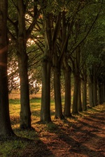 Preview iPhone wallpaper Boulevard, sun, trees, road
