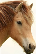 Preview iPhone wallpaper Brown mane horse close-up