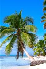 미리보기 iPhone 배경 화면 카리브 해안의 풍경, 모래 해변, 코코넛 나무, 바다