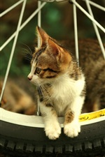 Cat and bicycle wheel