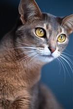 Preview iPhone wallpaper Cat close-up, blue background