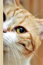 Preview iPhone wallpaper Cat hide and seek