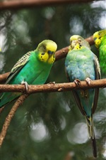 Preview iPhone wallpaper Four green parrots close-up