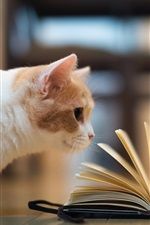 Preview iPhone wallpaper Humorous pictures, cat reading book