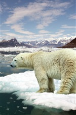 Preview iPhone wallpaper Ice floes, sea water, melting snow, polar bear