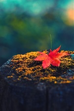 Preview iPhone wallpaper Maple leaf, tree stump, autumn