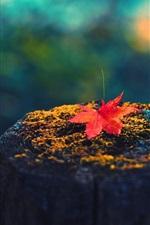 Maple leaf, tree stump, autumn