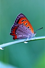 Morning dew, butterfly, close-up photography, fuzzy background