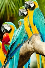 Preview iPhone wallpaper Parrots lined up to stand