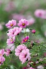 Pink flowers, summer, green, nature