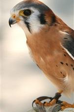 Preview iPhone wallpaper Predator, a bird hunter, close-up