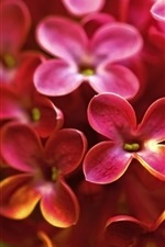 Preview iPhone wallpaper Red lilac macro photography