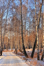 Preview iPhone wallpaper Snow winter, birch woods road