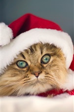 Preview iPhone wallpaper The kitty also love Christmas