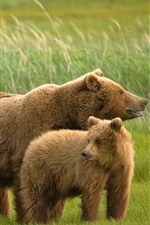 Preview iPhone wallpaper Three bears in the grass
