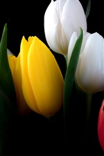 Preview iPhone wallpaper White, yellow, red, tulip flowers