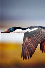 Preview iPhone wallpaper Wild duck flying in the sky