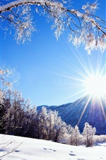 Winter, snow, mountains and trees, white scenery, dazzling sunshine