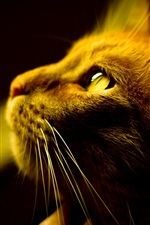 Preview iPhone wallpaper A brown cat's attention, facial close-up, yellow eyes