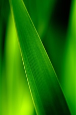 Preview iPhone wallpaper Close-up of green grass blades, leaves soft focus photography