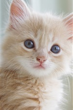 Preview iPhone wallpaper Cute kitten close-up, cat's whiskers, eyes, facial expressions