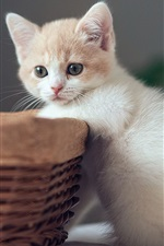 Preview iPhone wallpaper Cute kitten with basket