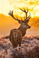 Preview iPhone wallpaper Deer under the sunset, warm forest grass