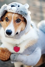 Cão bonito roupas novas