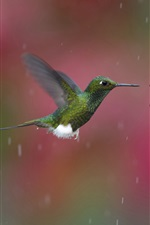 Preview iPhone wallpaper Rainy day, hummingbird gather nectar, red flower