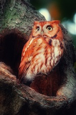 Preview iPhone wallpaper Red feather owl in the forest
