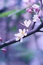Preview iPhone wallpaper Spring pink flowers in full bloom, bokeh