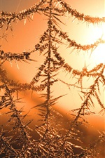 Preview iPhone wallpaper The Cobweb under winter sunset