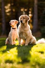 Dois cães no sol sobre a grama