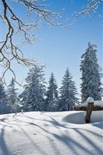 Preview iPhone wallpaper Winter beautiful landscape, thick snow, the trees, the sun