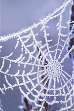 Preview iPhone wallpaper Winter cobwebs