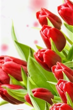 Preview iPhone wallpaper A bouquet of red tulips, white background