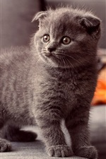 Preview iPhone wallpaper Cute gray cat, standing observation