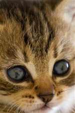 Preview iPhone wallpaper Cute kitten close-up photography, eyes beard close-up