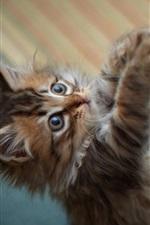 Preview iPhone wallpaper Cute little furry cat