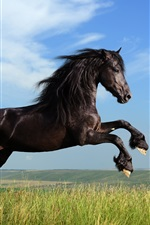 Preview iPhone wallpaper Freedom black horse galloping