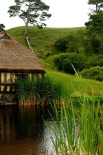 Fresh air and green nature, ponds, huts, grass