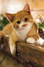 Preview iPhone wallpaper Holidays at home cute kitten