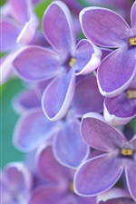 Preview iPhone wallpaper Lilac flowers macro, emerald green background, spring