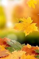 Preview iPhone wallpaper Maple leaves falling in autumn
