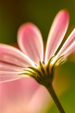 Preview iPhone wallpaper Pink flower petals macro photography
