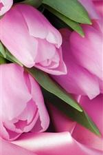 Preview iPhone wallpaper Pink tulip macro, pink satin