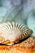 Preview iPhone wallpaper Seashell close-up, bokeh