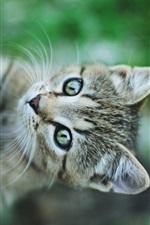 Small cat green eyes, climbing